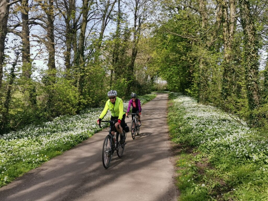 Two cyclists come down a lane lined with white wild garlic flowers