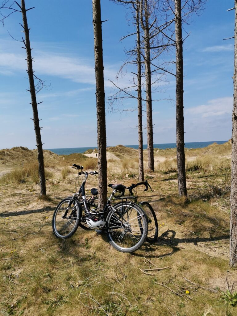 Two bikes lean against a tree at the endge of newborough pine forest with sand dunes and sea in the backdrop.