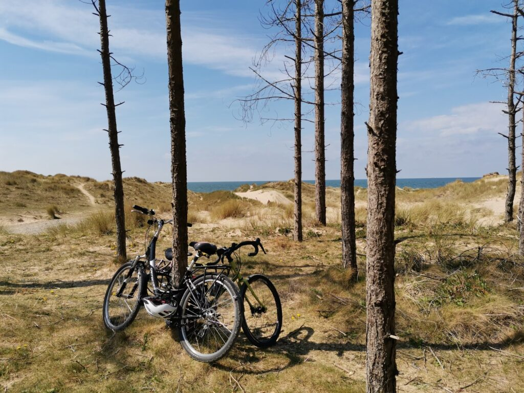 Bicycles lean against trees in front of dunes and sea beyond